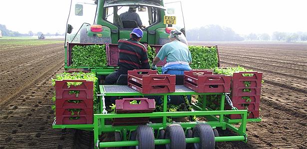 Planting Salads